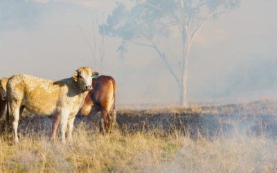 RFCS Services delivering better outcomes for NSW farmers